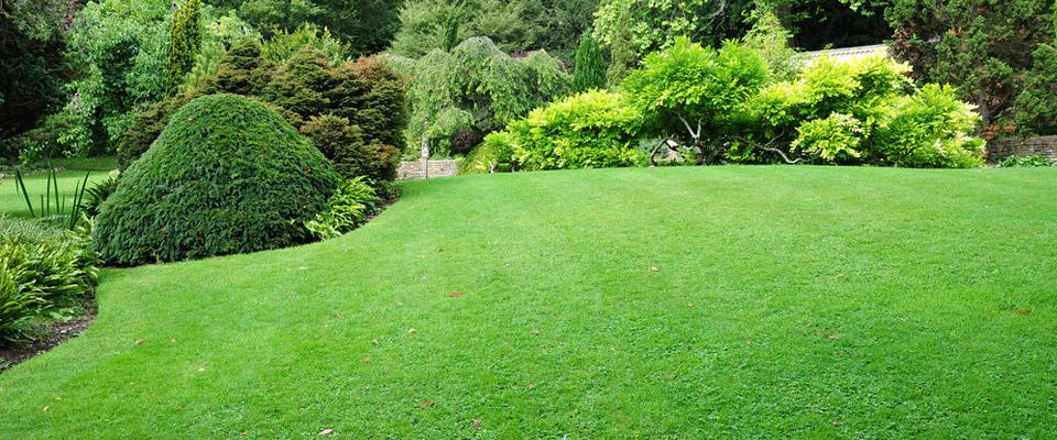 lawn mowed garden